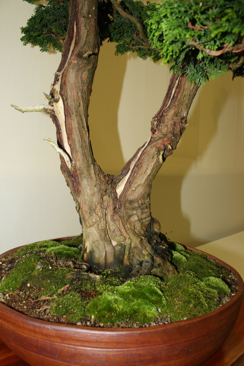 Milwaukee Bonsai Society 44th Annual Exhibit Mbs_2022