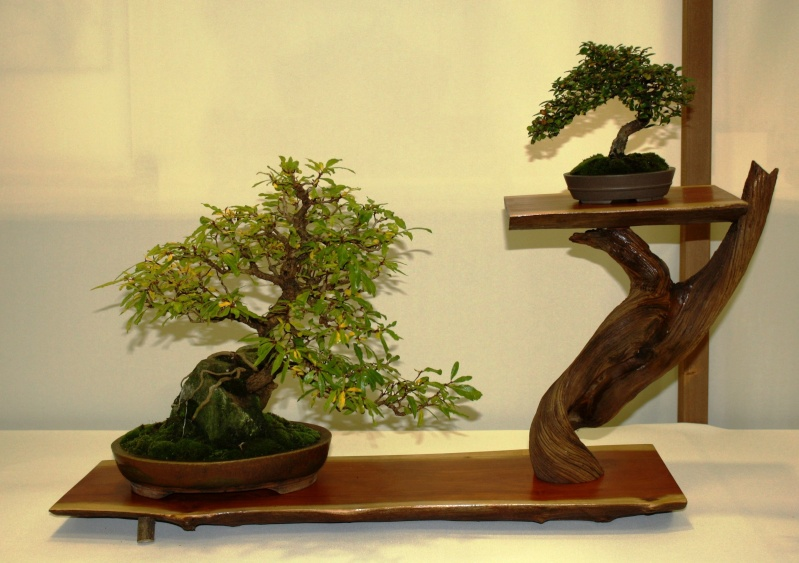 Milwaukee Bonsai Society 44th Annual Exhibit Mbs_2023