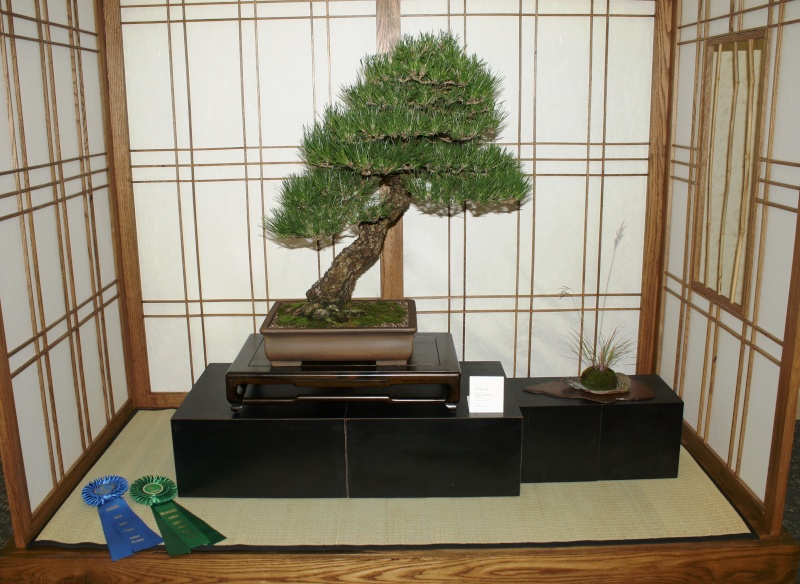 Milwaukee Bonsai Society 44th Annual Exhibit Mbs_2025