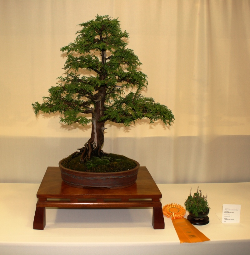 Milwaukee Bonsai Society 44th Annual Exhibit Mbs_2026