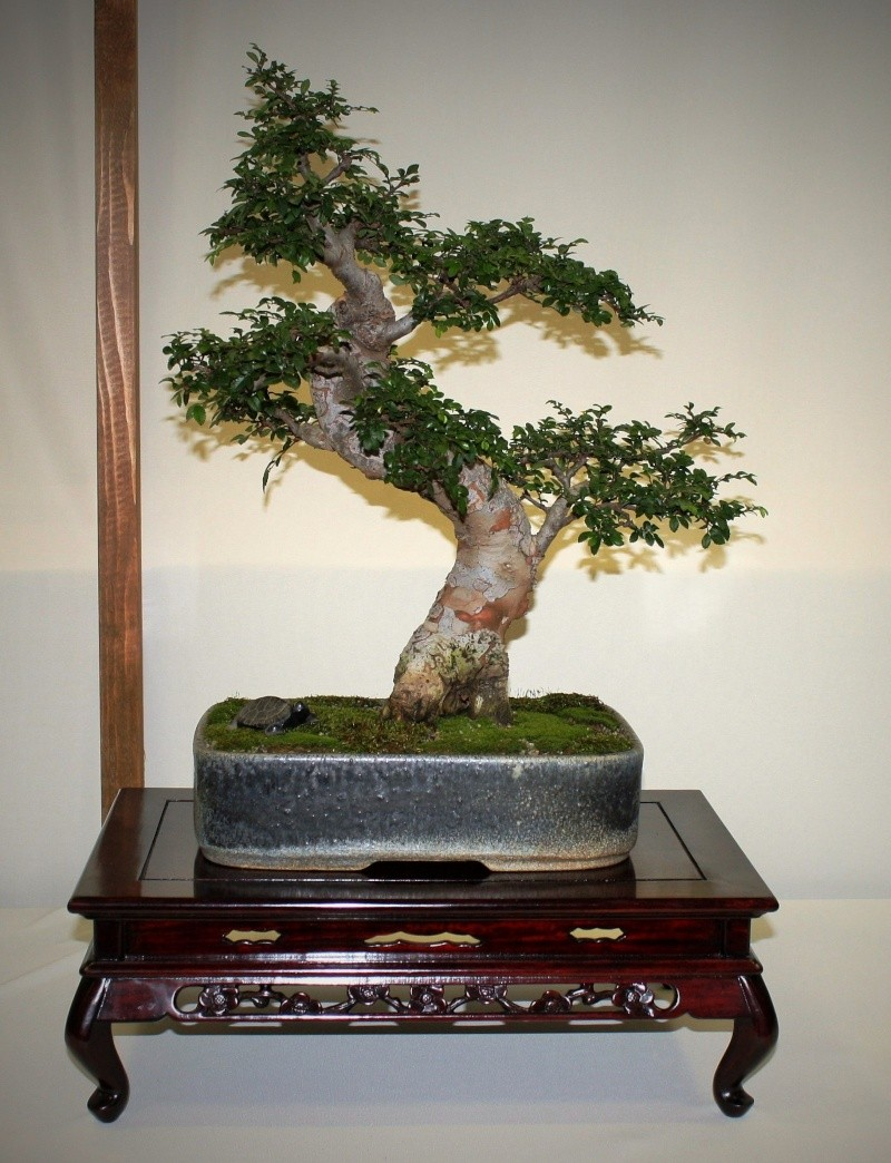 Milwaukee Bonsai Society 44th Annual Exhibit Mbs_2028