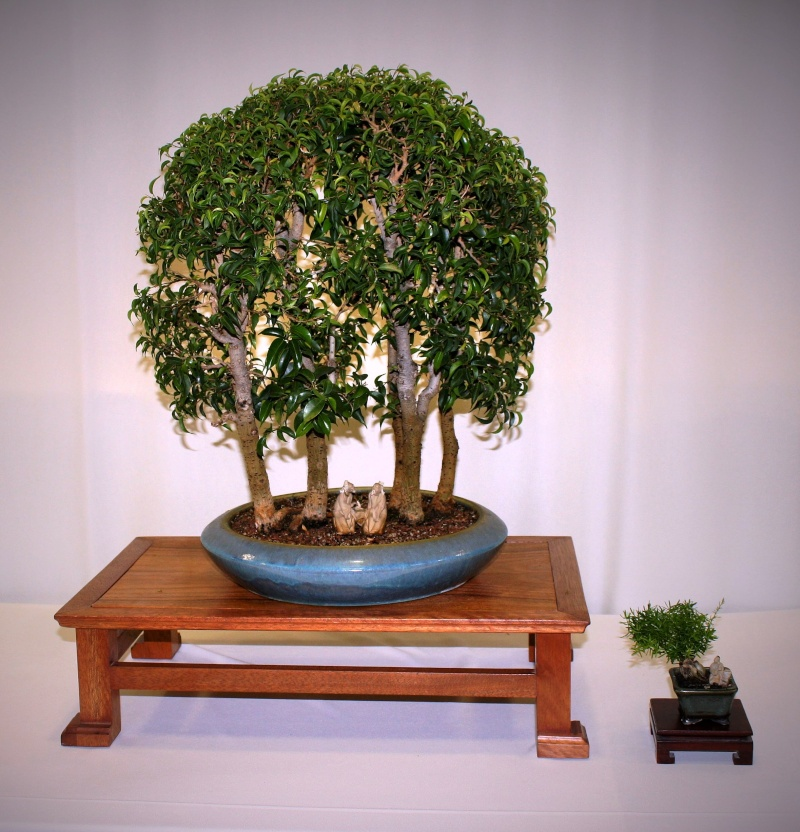 Milwaukee Bonsai Society 44th Annual Exhibit Mbs_2030