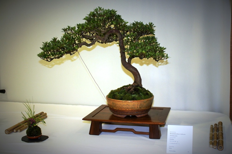 Milwaukee Bonsai Society 44th Annual Exhibit Mbs_2031