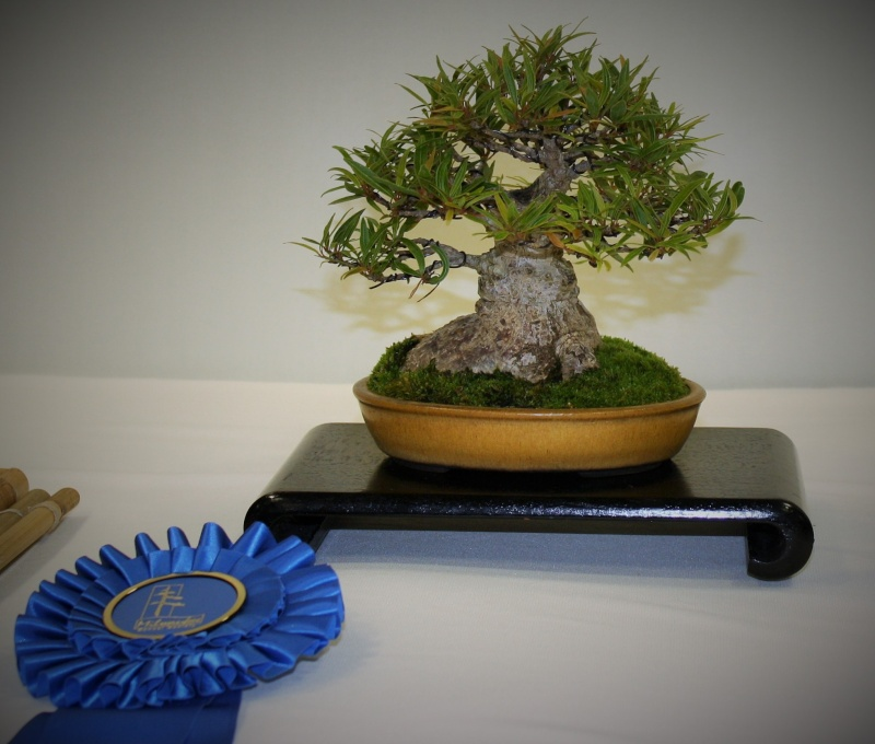 Milwaukee Bonsai Society 44th Annual Exhibit Mbs_2034