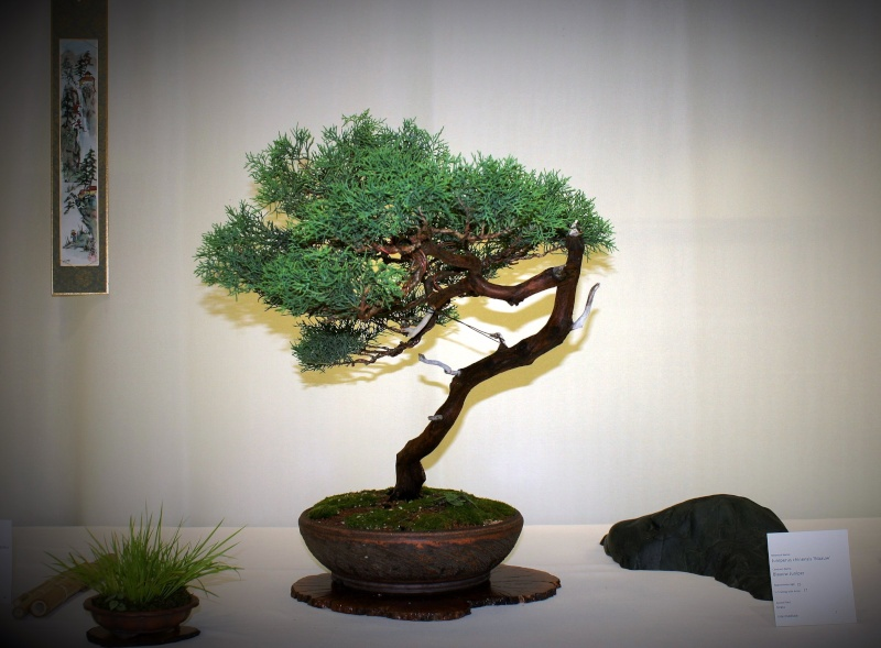 Milwaukee Bonsai Society 44th Annual Exhibit Mbs_2036