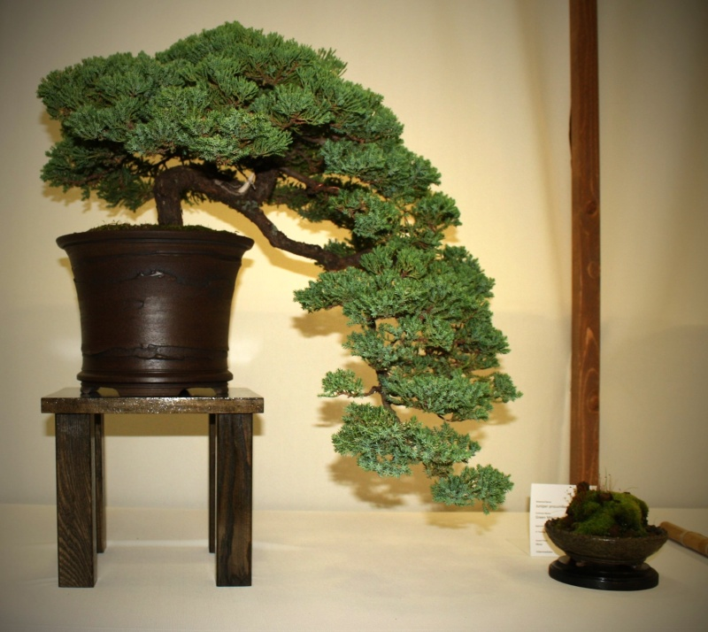Milwaukee Bonsai Society 44th Annual Exhibit Mbs_2042