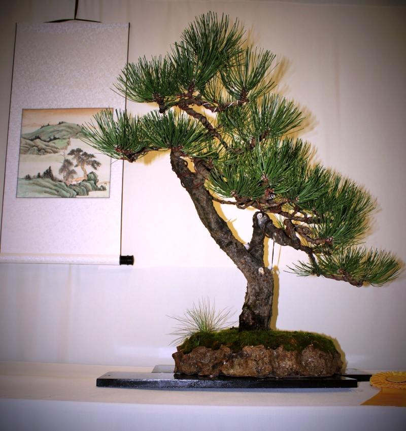 Milwaukee Bonsai Society 44th Annual Exhibit Mbs_2047