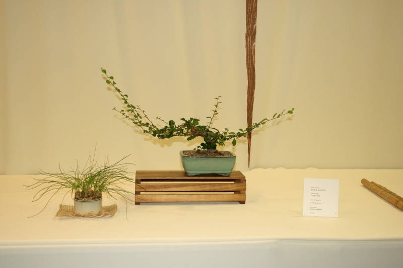 Milwaukee Bonsai Society 44th Annual Exhibit Mbs_2050