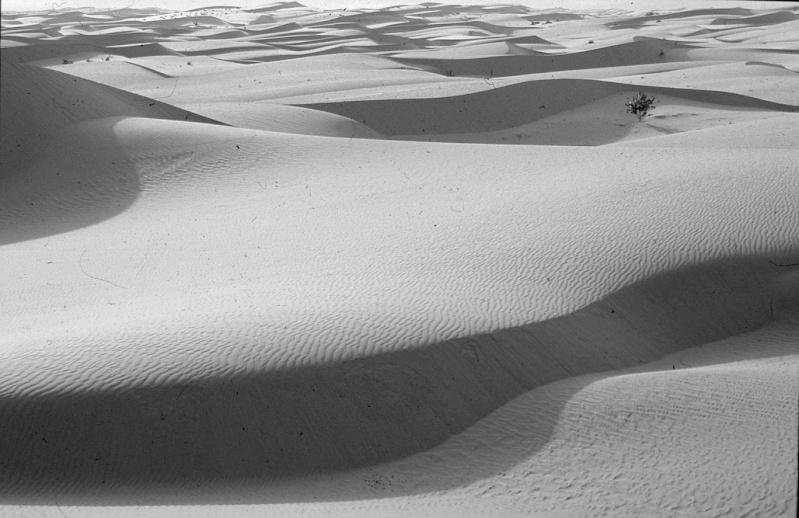 [Le désert] Sahara et atlantique : plus au Sud , bivouacs , photos ... Chingu12