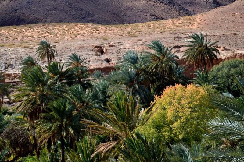 Nov 2014 iCH sa première école dans le désert PHOTOS... Dsc_0312