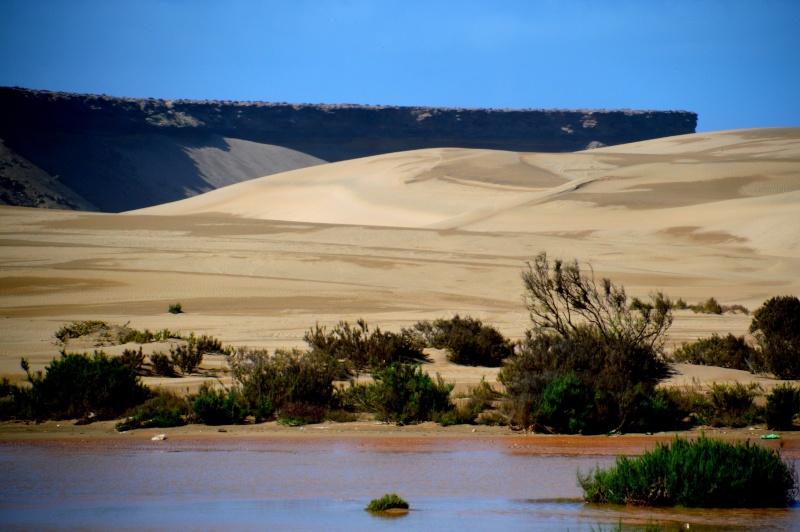 Bonne année;Le Sahara nouveau est arrivé ...photos Dsc_0511