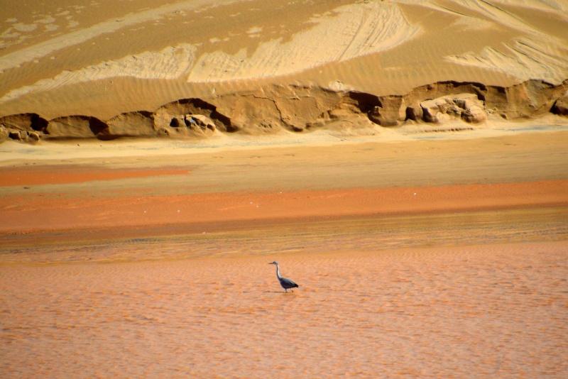 Bonne année;Le Sahara nouveau est arrivé ...photos Dsc_0514