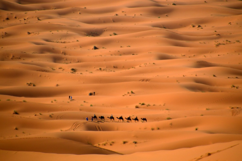 Bonne année- Alerte orange:les sables ! Dsc_0516