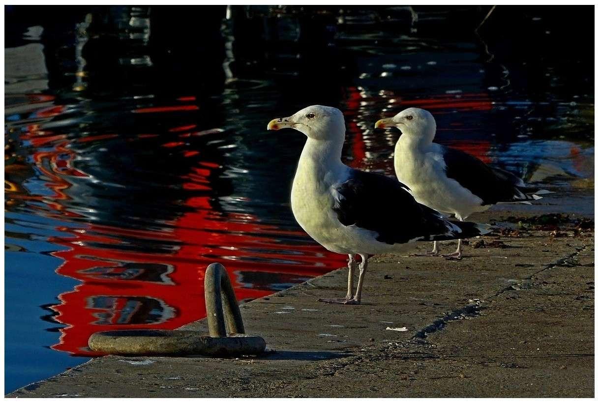 Une PHOTO  >>>>>>>> un fil ... 92145911