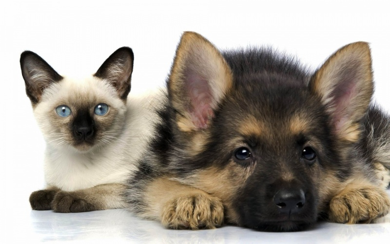 """S""""entendre comme chien et chat-LA VÉRITÉ en vidéos et en images - Page 2 Catand10"""