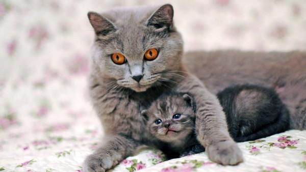 Les mamans et leur bébé - Page 2 F5773110