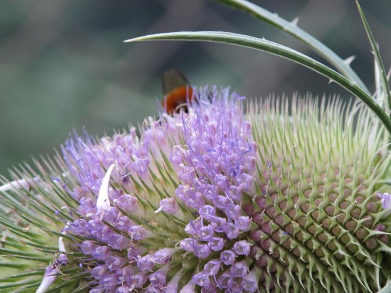 Wildblumen ( Sammelthread) - Seite 6 Img_0513