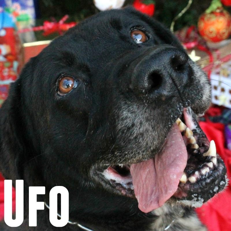 Affiche chien - Mise à jour Advent10