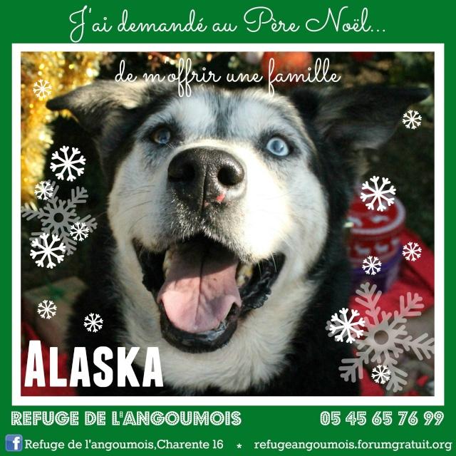 Affiche chien - Mise à jour Alaska10