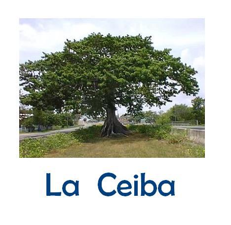 MÁGIA VERDE Ceiba12