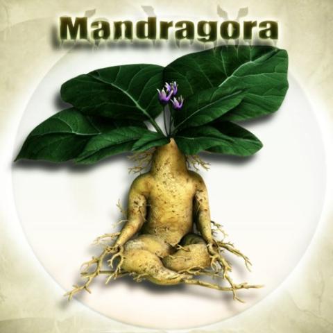 MÁGIA VERDE Mandra10