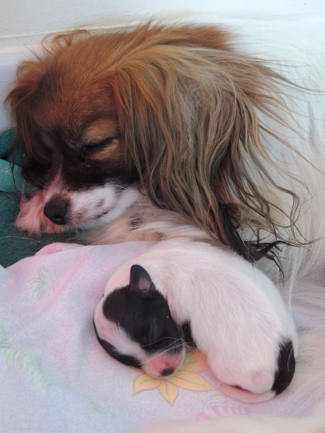 Jenna et KHash Vont avoir deux bébés pour le 5 juin  Dscn1412