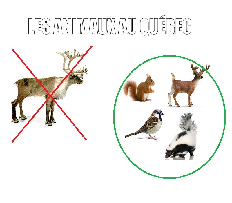 Éducation du Québec par M. Fleck Animau11