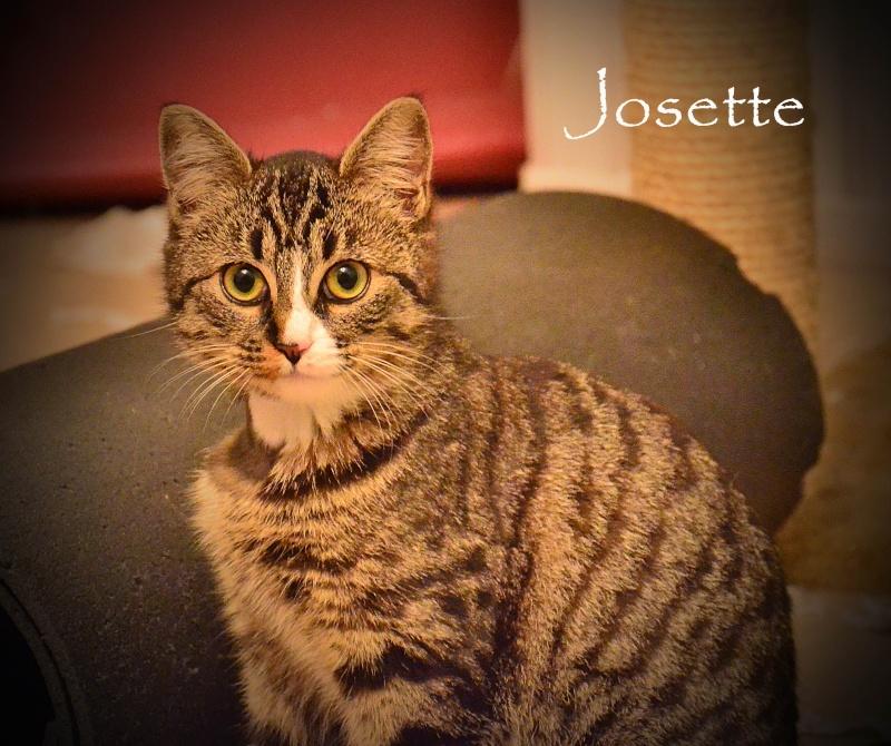 josette - Josette, chatonne tigrée type européen, née en juin 2014 Dsc_2110