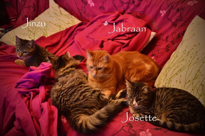 josette - Josette, chatonne tigrée type européen, née en juin 2014 Dsc_2211