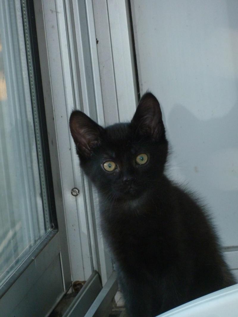 Jameson, chaton noir né le 11/04/2014 P1140511