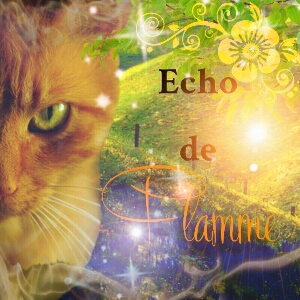 Cat's News - Le Retour ! Echopi10