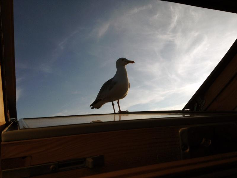 Mon copilote Photo11