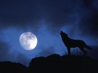 klikni a staň se vlkem :D