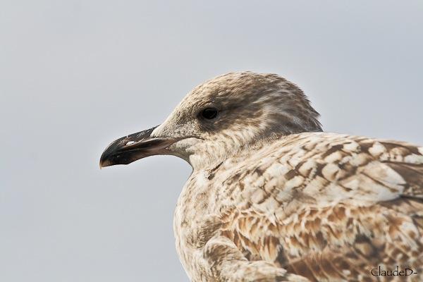 Animaux, oiseaux... etc. tout simplement ! - Page 3 Goel10