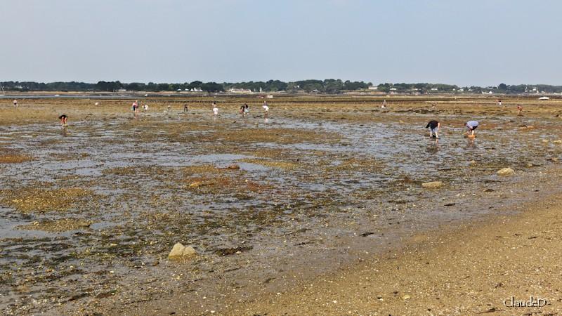 Jour de grande marée : la pêche à la crevette. Mareie17
