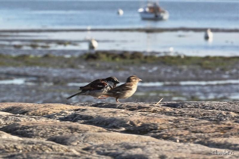 Animaux, oiseaux... etc. tout simplement ! - Page 7 Piaf10