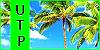Under the Palmtrees (Confirmación normal) 100x5010