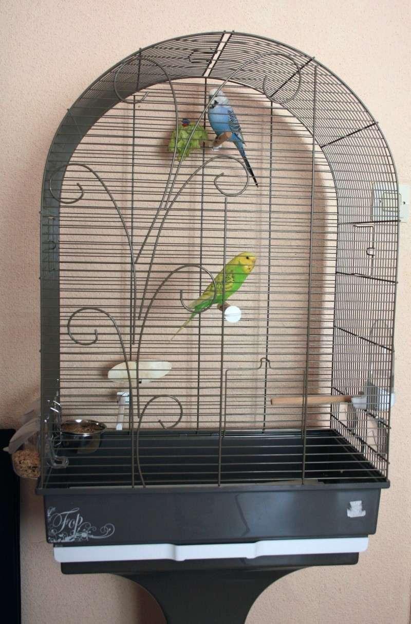 Inko & Saé Cage10