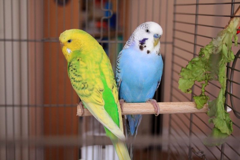 Inko & Saé Duo10