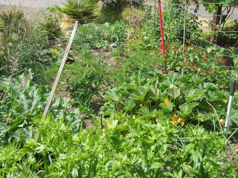 Anyone growing gardens this year?  Dscf1812