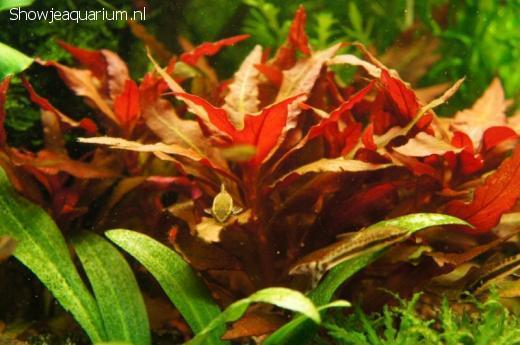 Remise en eau aquarium 25L - Page 2 Db_28010