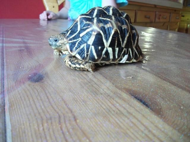 sexe de ma tortue elegans. Dscf3018