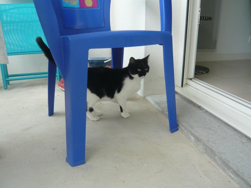 GENTILLE, chatte noire et blanche, née en 2011 P1020419