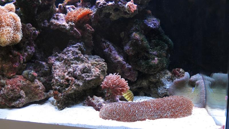 Présentation de mon nano reef 10img_10