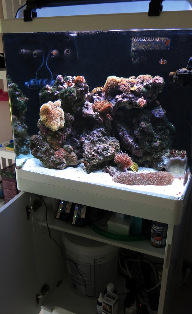 Présentation de mon nano reef 1img_110