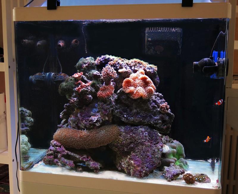 Présentation de mon nano reef - Page 3 1img_111