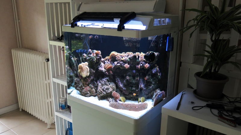 Présentation de mon nano reef 3img_110