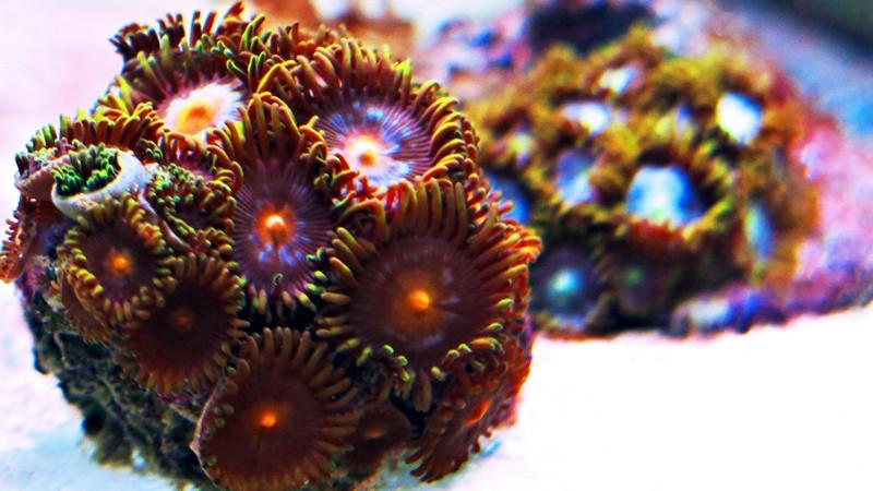 Présentation de mon nano reef - Page 3 3img_111