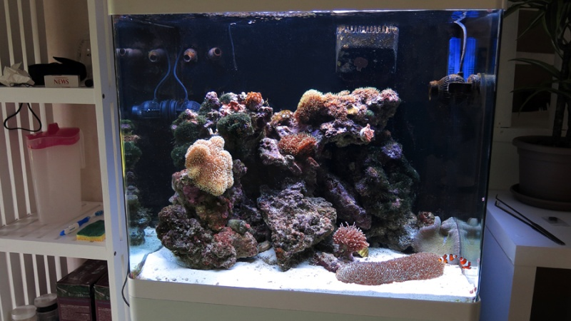 Présentation de mon nano reef 5img_110