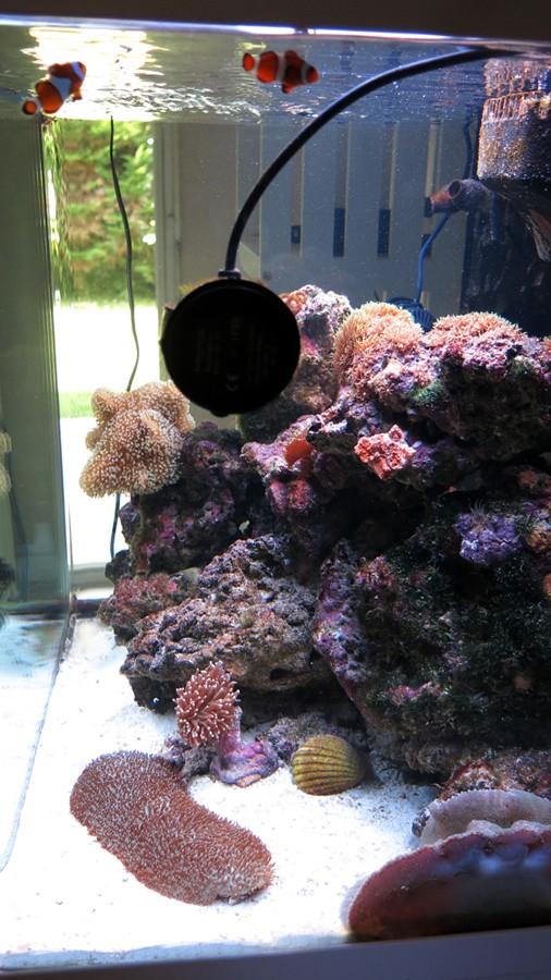Présentation de mon nano reef 6img_110